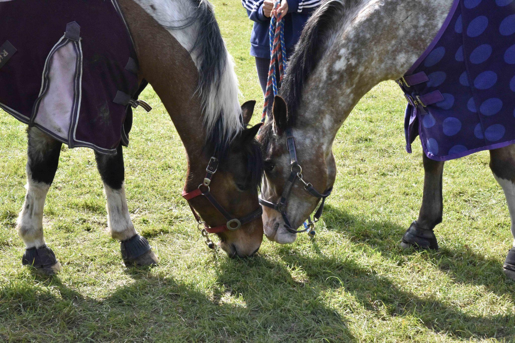 Greatham Equestrian Centre